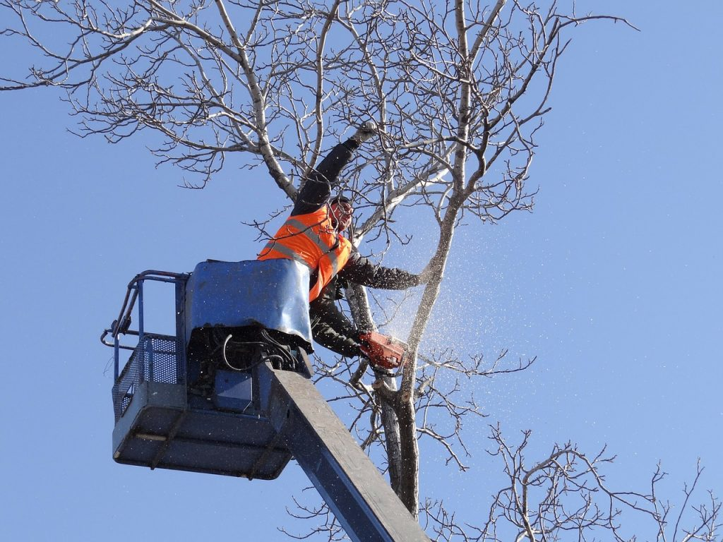 Rochester Hills arborist sawing tree down
