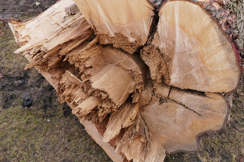 Tree stump after Rochester Hills tree removal