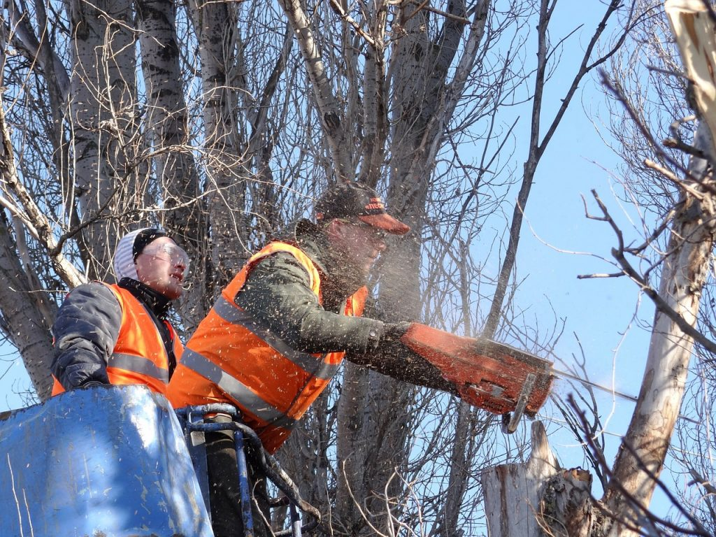 Rochester tree trimming and tree removal arborists at residential site