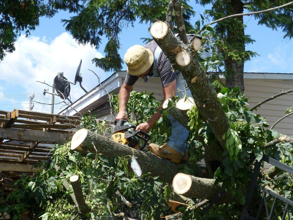 Rochester Hills arborist working