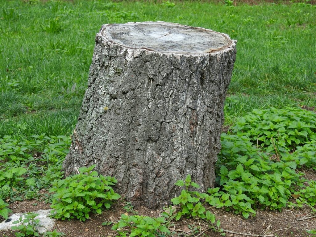 Tree stump in Rochester backyard
